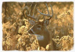 Maryland Deer Hunting